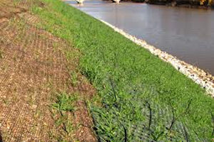 Vegetation Management at Levees, Floodwalls and Dams